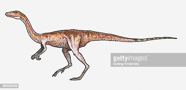 Illustration of Procompsognathus theropod dinosaur