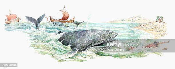 illustration of prophet jonah swimming away from open mouth of large whale - biblical event stock illustrations