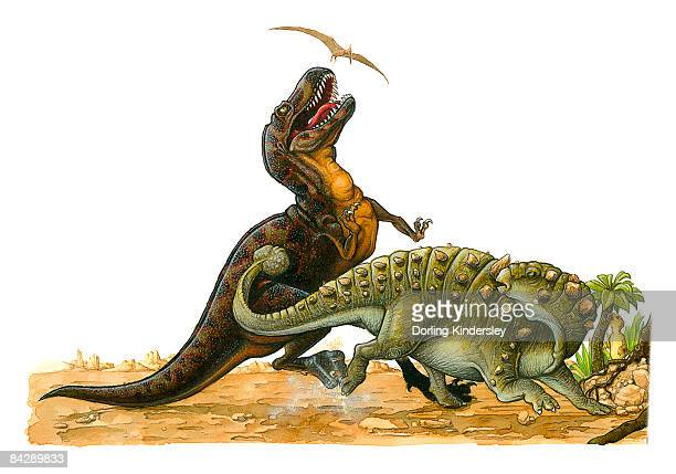 ilustraciones, imágenes clip art, dibujos animados e iconos de stock de illustration of pterosaur flying above tyrannosaurus rex as it looks up with open mouth as euoplocephalus hits body of the larger dinosaur with tail - triásico