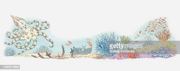 illustration of sea life including octopus, shoal of fish, coral, and shipwreck in background - endopack stock illustrations