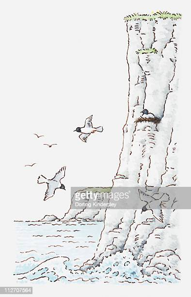Illustration of shoreline of cliffs with birds nesting and flying overhead