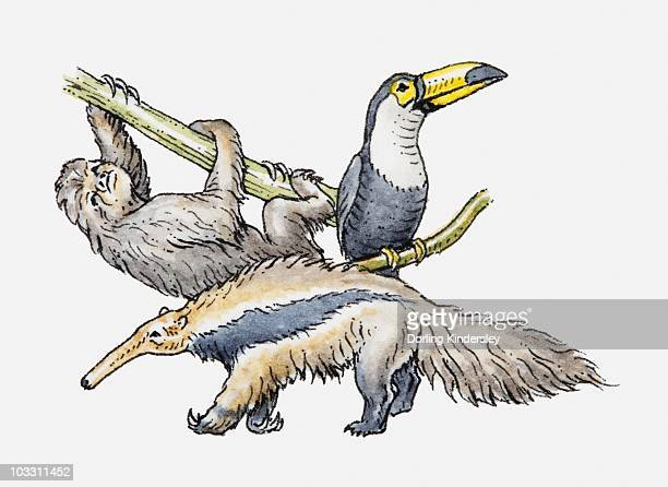 illustration of sloth, toco toucan and giant anteater - giant anteater stock illustrations