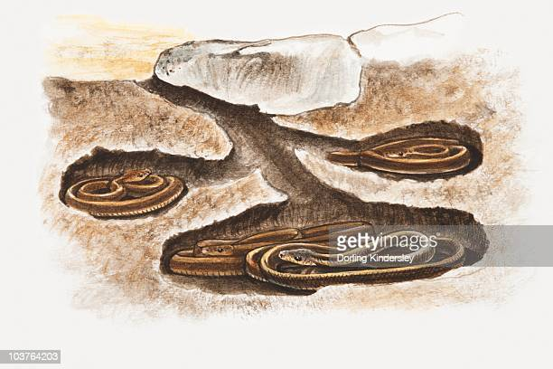 burrow stock illustrations and cartoons getty images