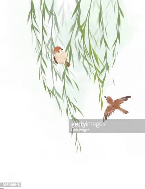 illustration of sparrows and willow tree against white background - two animals stock illustrations