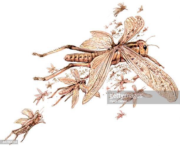 Illustration of swarm of locusts
