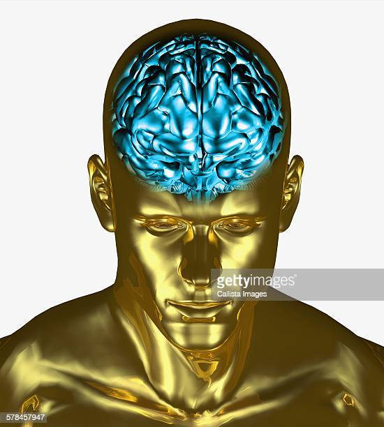 ilustraciones, imágenes clip art, dibujos animados e iconos de stock de illustration of the brain inside the skull of an adult man - modelos del cuerpo humano