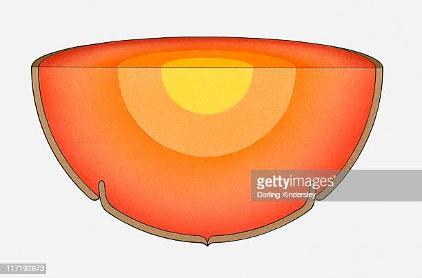 ilustraciones, imágenes clip art, dibujos animados e iconos de stock de illustration of the earth's interior showing the core, mantle and crust - corteza terrestre