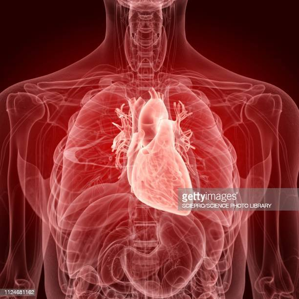 illustration of the human heart - condition stock illustrations