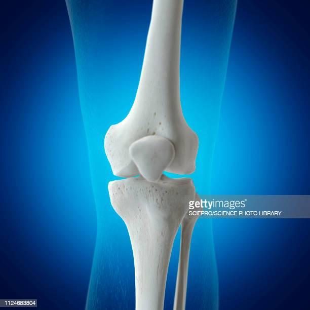 illustration of the knee bones - joint body part stock illustrations, clip art, cartoons, & icons