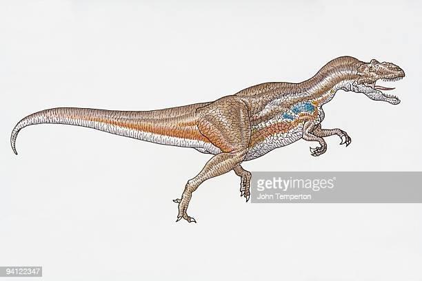 Illustration of theropod Allosaurus dinosaur