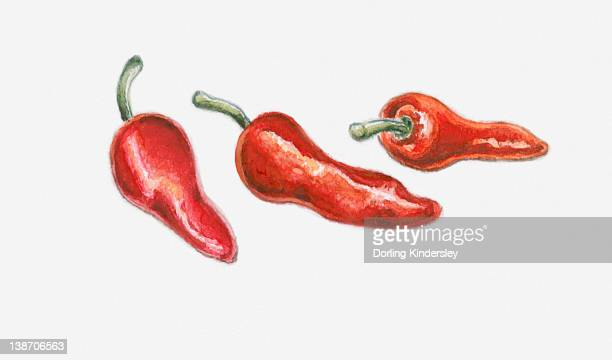 Illustration of three red pimento peppers