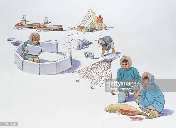 illustrations, cliparts, dessins animés et icônes de illustration of traditional inuit hunting methods and constructing igloo contrasting with modern sno - igloo