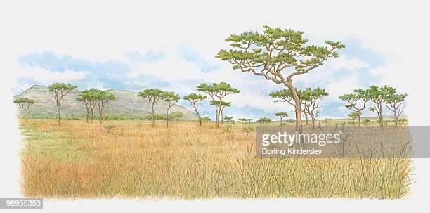 illustration of trees on kenyan savannah - savannah stock illustrations, clip art, cartoons, & icons