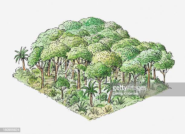 Illustration of tropical rainforest