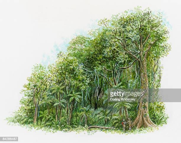 illustration of two people looking up at tall tree in rainforest in northeastern australia - australia day stock illustrations