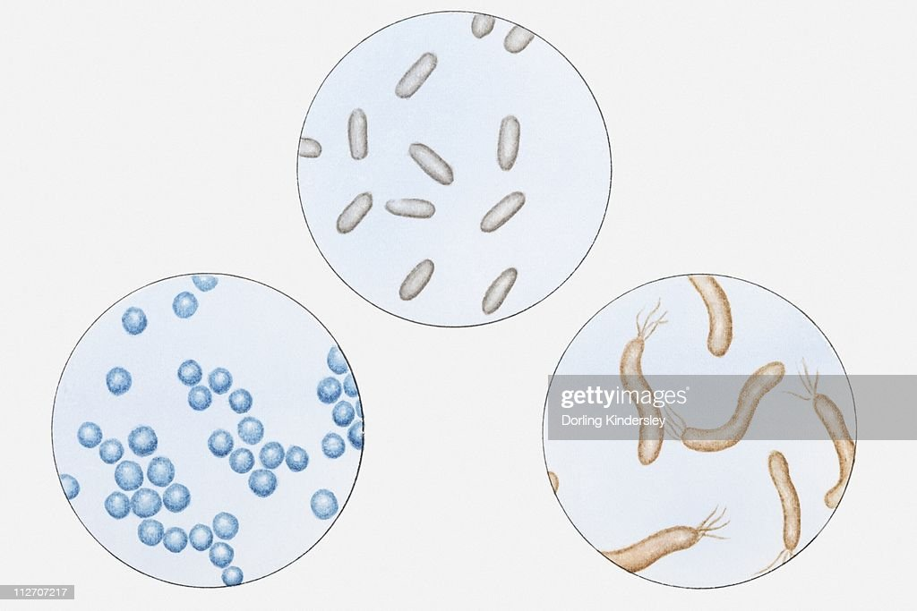 Illustration of types of bacteria bacillus coccus and spirillum illustration of types of bacteria bacillus coccus and spirillum stock illustration ccuart Images