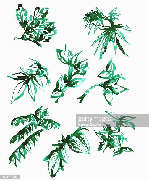 illustration of various leaves on white background - 2015 stock illustrations