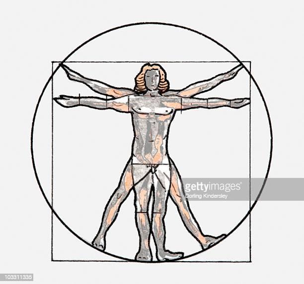 ilustraciones, imágenes clip art, dibujos animados e iconos de stock de illustration of vitruvian man symbol - leonardo da vinci