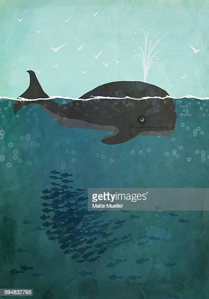 illustrations, cliparts, dessins animés et icônes de illustration of whale swimming in sea - baleine