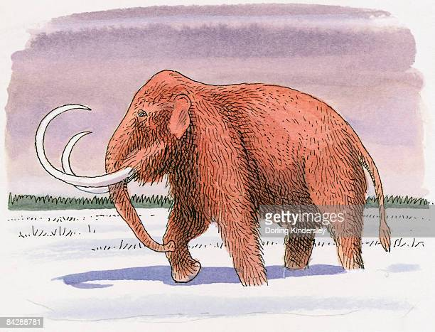 Illustration of Woolly Mammoth (Mammuthus primigenius), walking in snow at beginning of Ice Age
