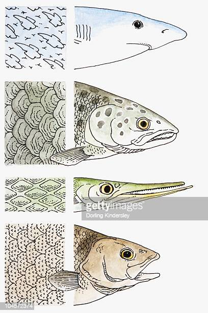 illustration showing close-up of shark, salmon, gar and perch scales - animal scale stock illustrations, clip art, cartoons, & icons