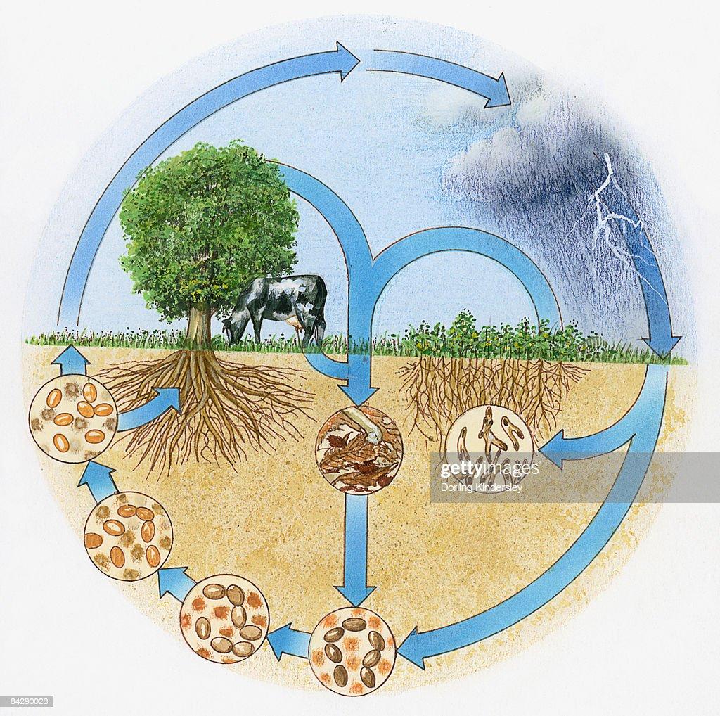 Illustration showing nitrogen and hydrologic cycle  : stock illustration