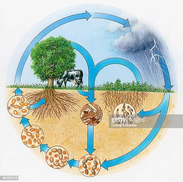 Illustration showing nitrogen and hydrologic cycle