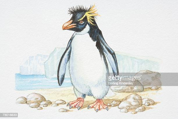 illustration, standing rockhopper penguin (eudyptes chrysocome), side view. - webbed foot stock illustrations, clip art, cartoons, & icons
