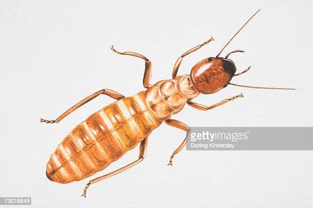 illustrations, cliparts, dessins animés et icônes de illustration, termite (isoptera), vue du dessus. - termite