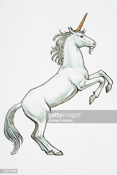 illustration, unicorn standing on hind legs. - unicorn stock illustrations