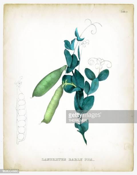 illustrations 1849