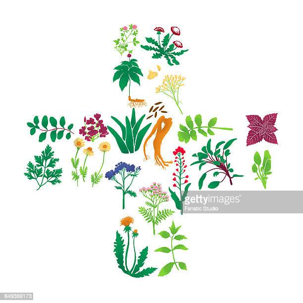 illustrations of herbal plants on white background - natural condition stock illustrations, clip art, cartoons, & icons