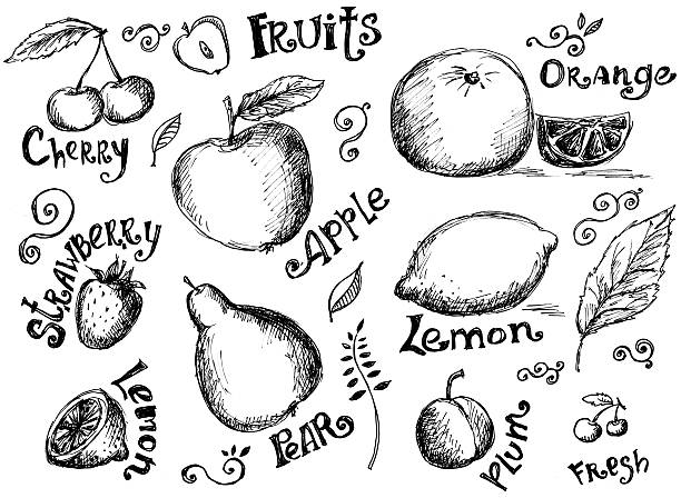 Illustrations Of Various Fruits And Leaves Wall Art