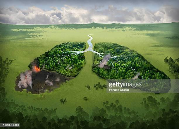 ilustrações de stock, clip art, desenhos animados e ícones de illustrative image of burning lungs on field representing smoking issues - desmatamento