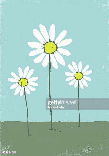 illustrative image of daisies growing on field - growth stock illustrations