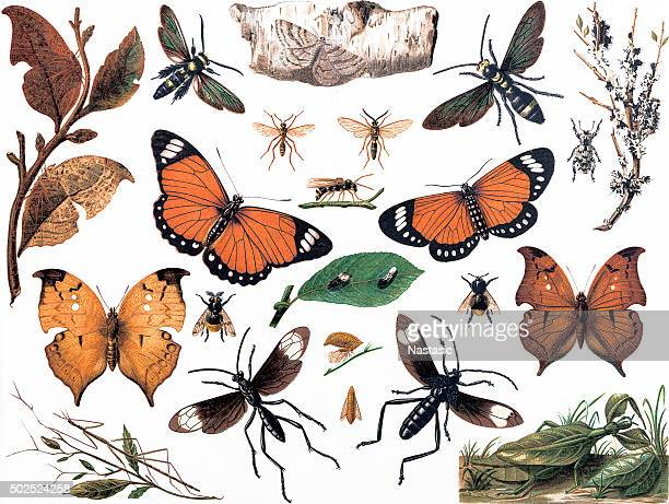 imitative insects - printout stock illustrations