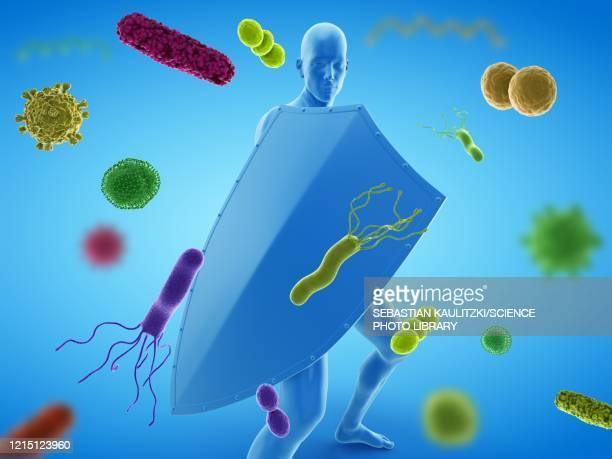 immune system, conceptual illustration - order stock illustrations