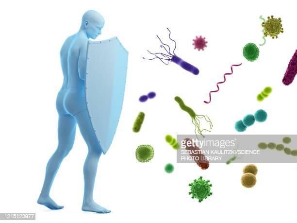 ilustrações, clipart, desenhos animados e ícones de immune system, conceptual illustration - immune system