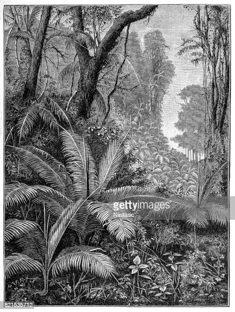 illustrations, cliparts, dessins animés et icônes de palmiers indien - jungle