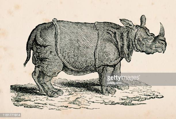 indian rhinoceros illustration - historical document stock illustrations, clip art, cartoons, & icons