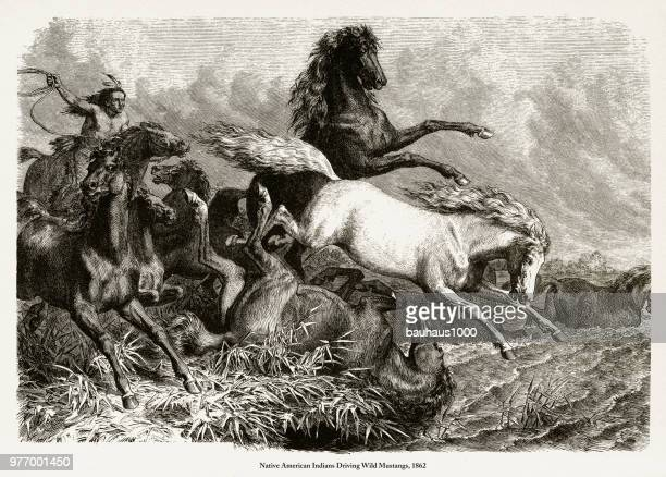 indians driving wild mustangs, native american engraving, 1862 - apache culture stock illustrations, clip art, cartoons, & icons