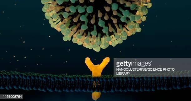 influenza virus and receptor, illustration - receptor stock illustrations