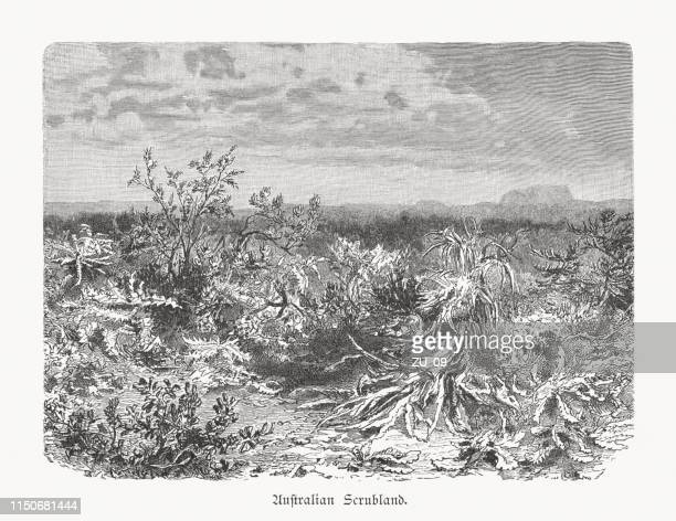 Inner Australian Scrubland, wood engraving, published in 1897