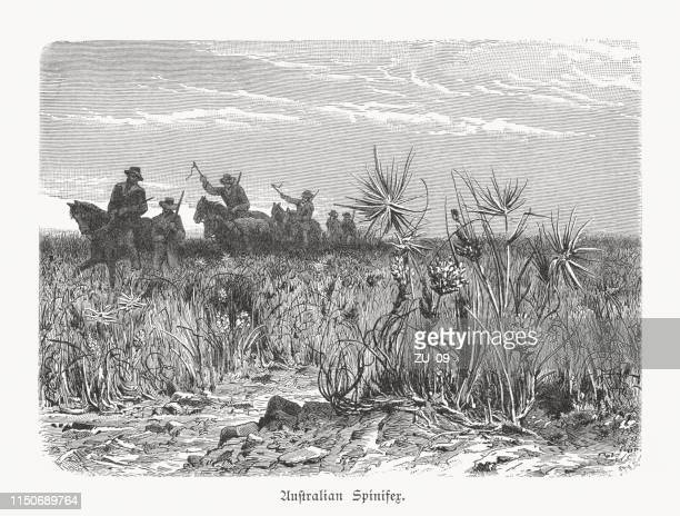Inner Australian Spinifex Steppe, wood engraving, published in 1897