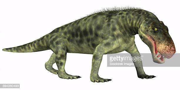 Inostrancevia is a carnivorous reptile that lived during the Permian age of Russia.