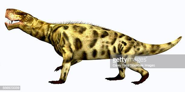 Inostrancevia was a carnivorous reptile that lived during the Permian Period of Russia.