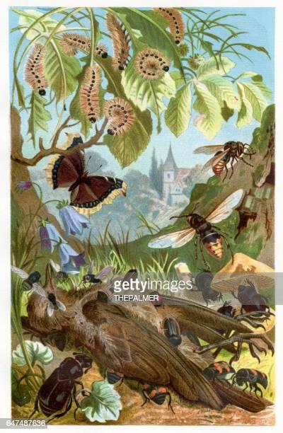 bildbanksillustrationer, clip art samt tecknat material och ikoner med insekt som äter deadth bird chromolithograph 1884 - litografi