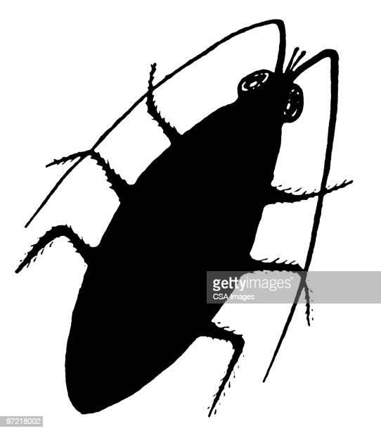 ilustraciones, imágenes clip art, dibujos animados e iconos de stock de insect - cucarachas