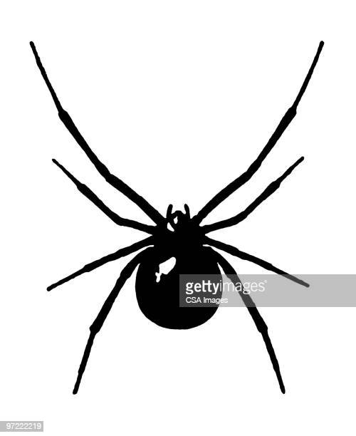 insect - spider stock illustrations