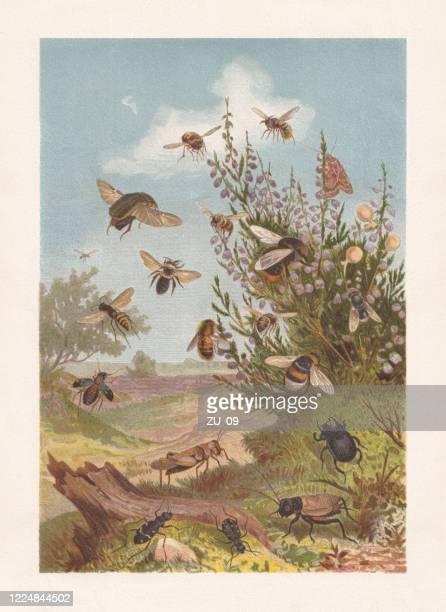ilustraciones, imágenes clip art, dibujos animados e iconos de stock de vida de insectos en el brezo, cromolitógrafo, publicado en 1884 - biodiversidad